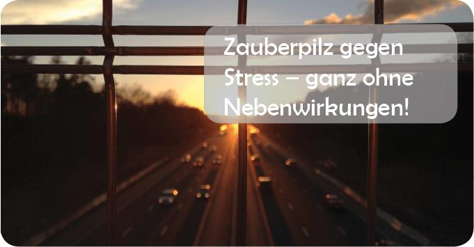 FB_Zauberpilz